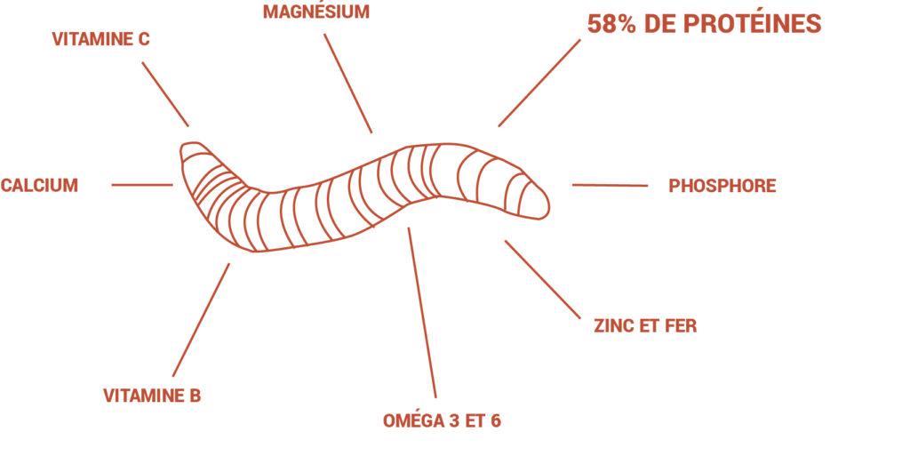 My IMPACT, des barres enrichies en protéines d'insectes